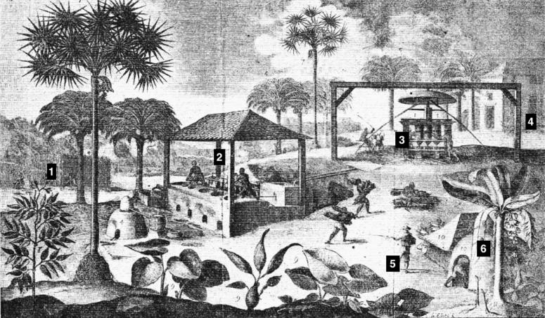 4e-hist-c02-plantation
